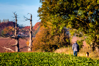 Hougoumont in autumn